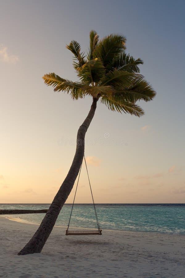 Imagem de uma palmeira e um balanço durante o por do sol fotos de stock royalty free