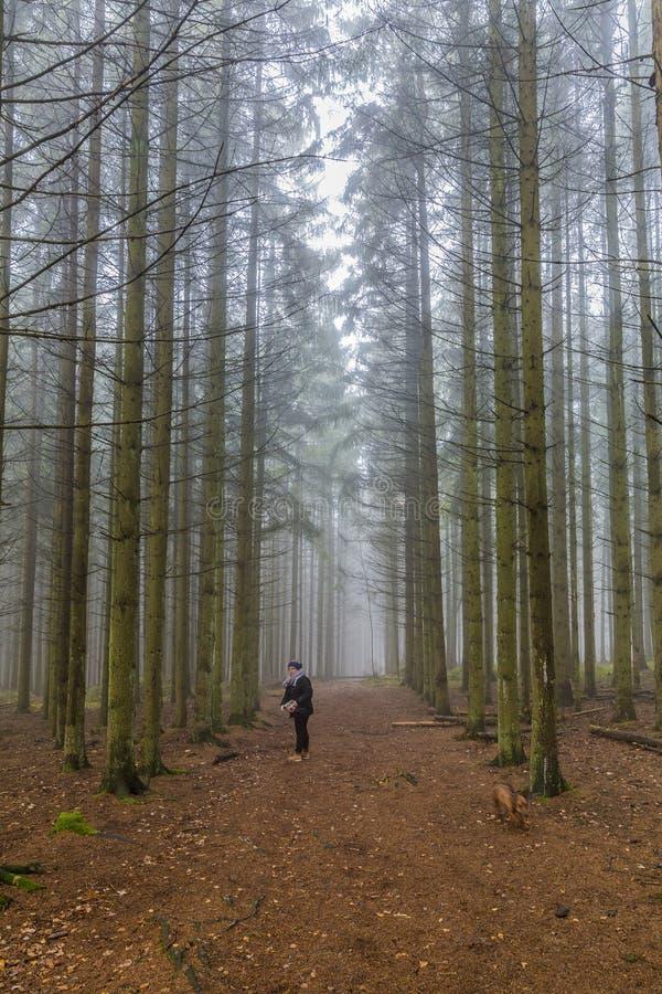 Imagem de uma posição da mulher em uma fuga que procura seu cão entre pinheiros altos na floresta fotografia de stock royalty free