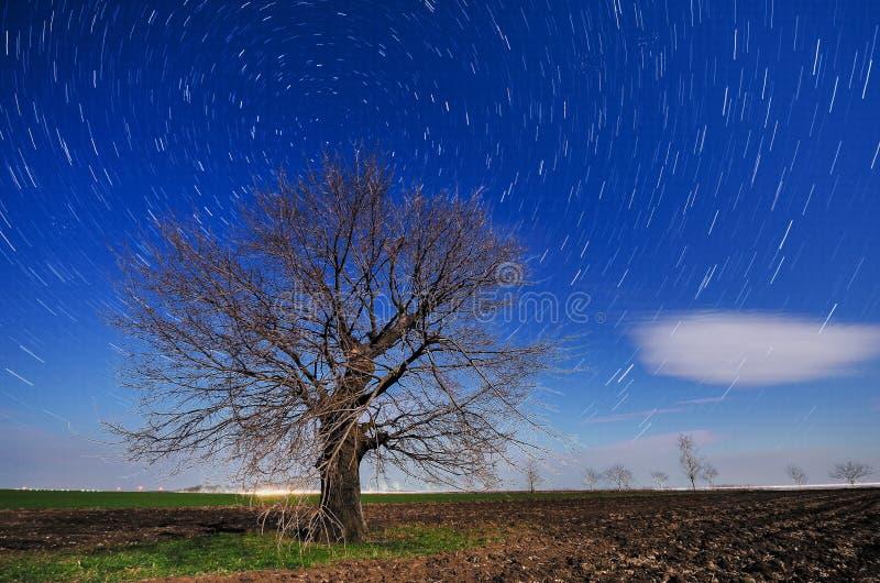 Imagem de uma silhueta isolada da árvore fotografia de stock royalty free