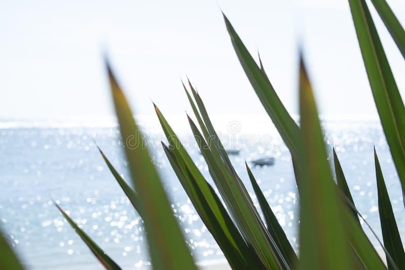 Imagem do borrão do mar imagem de stock
