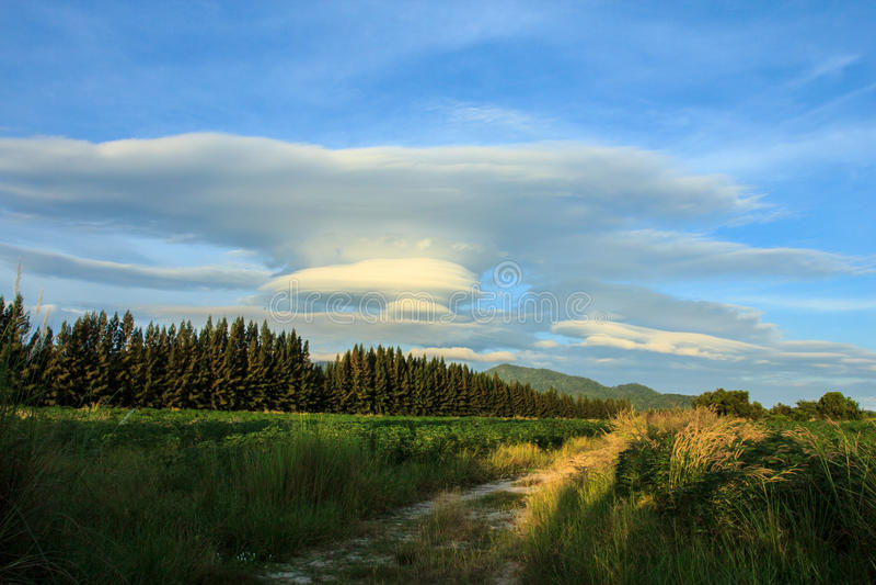 Download Countryfied imagem de stock. Imagem de feriados, fundos - 29829757