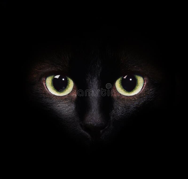 Imagem do close-up de um retrato de um gato Siamese imagens de stock