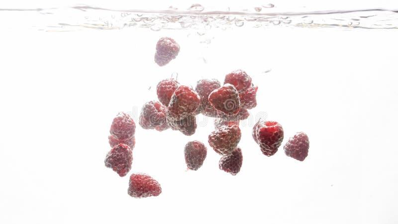 Imagem do close up dos lotes das framboesas maduras frescas que caem e que espirram na ?gua contra o fundo branco foto de stock royalty free