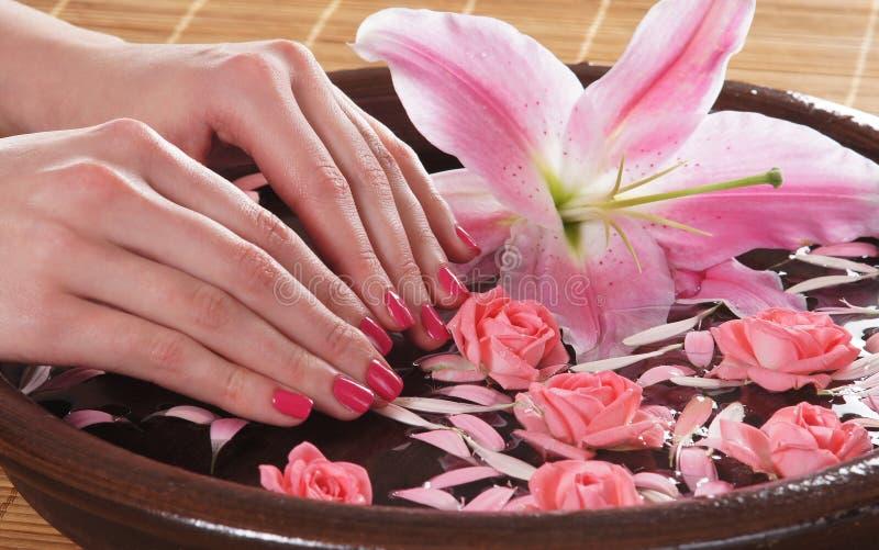 Imagem do Fim-acima das mãos e de rosas fêmeas imagem de stock