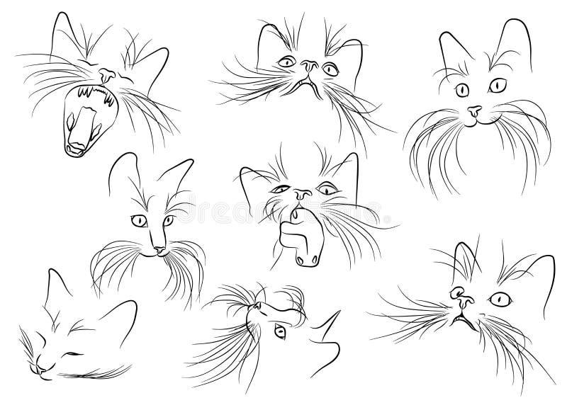 Imagem do focinho do gato com as suiças longas no CCB branco ilustração stock