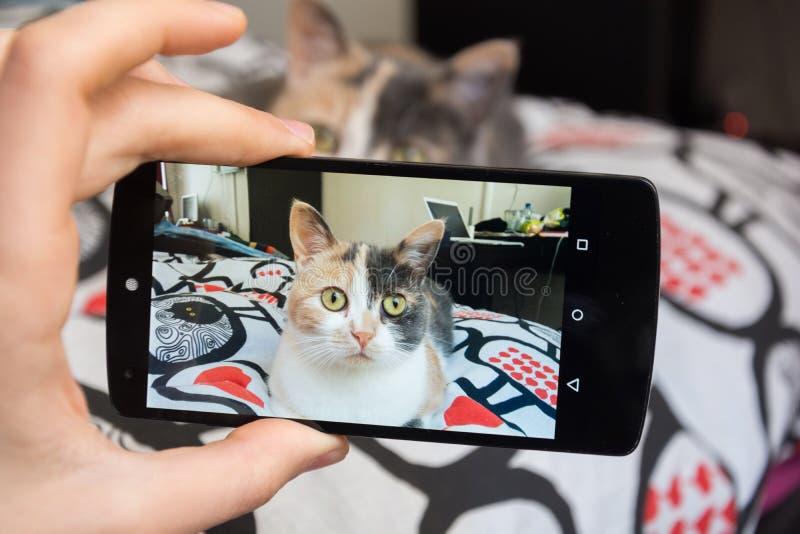 Imagem do gato pelo smartphone imagens de stock