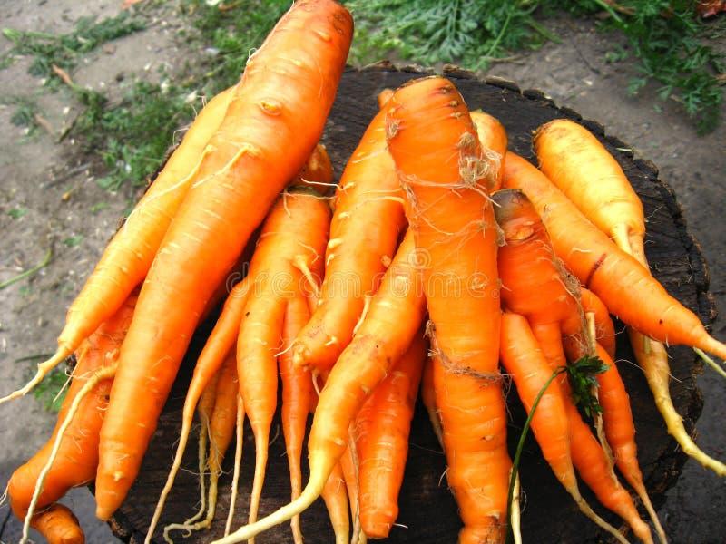 Download Grupo De Cenouras Alaranjadas Foto de Stock - Imagem de mantimento, vegetal: 29849706