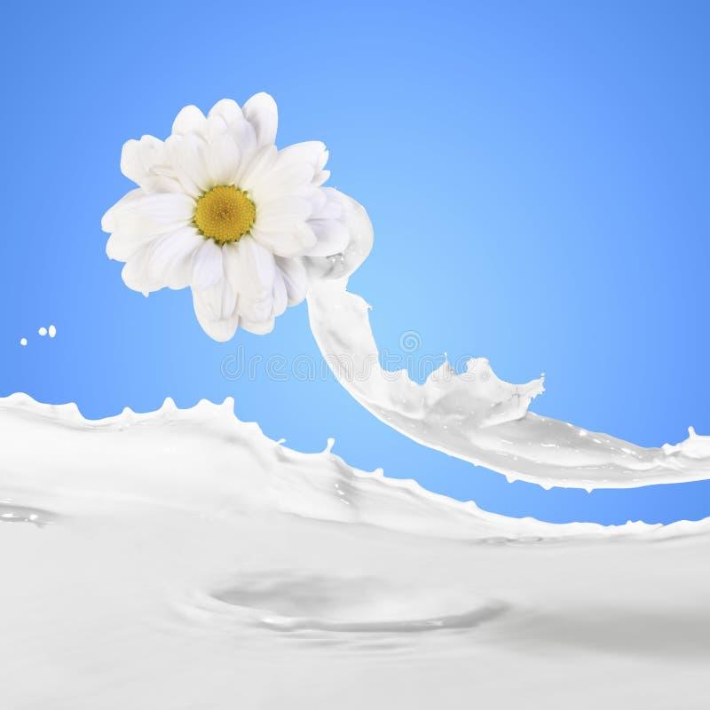 A imagem do leite espirra fotografia de stock royalty free