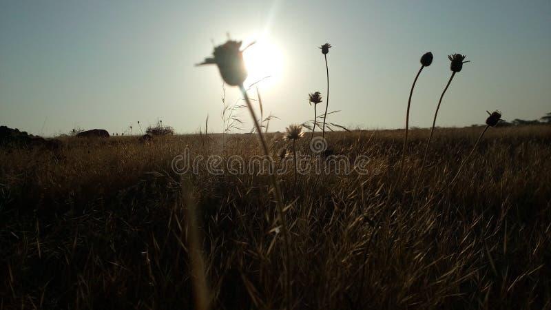 Imagem do nascer do sol foto de stock