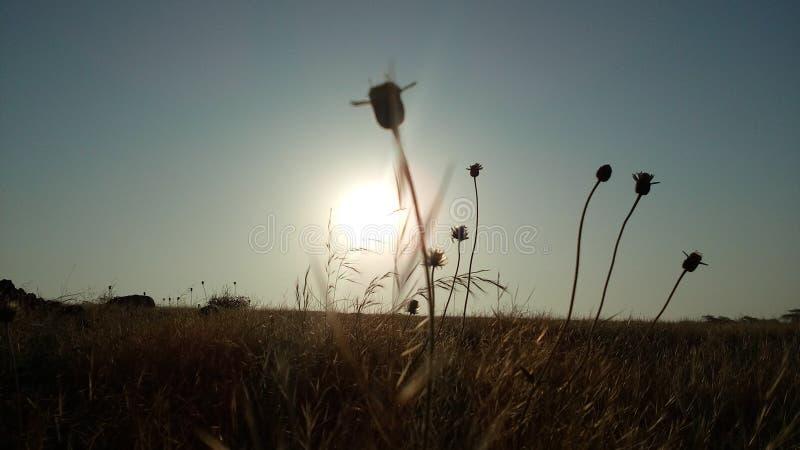 Imagem do nascer do sol fotografia de stock royalty free