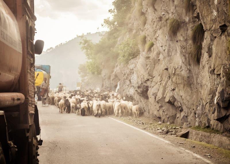 Imagem do ponto de vista do carro Um rebanho dos carneiros que andam ao longo de uma estrada do país na passagem de montanha Hima imagem de stock
