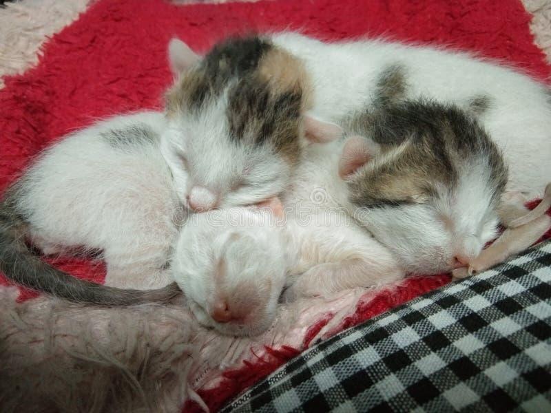 Imagem do sono de três gatos do bebê fotos de stock