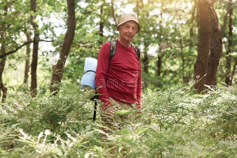 Imagem do turista idoso considerável organizado bom que está apenas na floresta, passando seu tempo livre com prazer, tendo facia fotos de stock