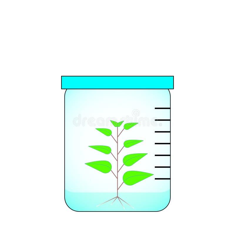 Imagem do vetor da cultura da planta in vitro no frasco de vidro ilustração royalty free