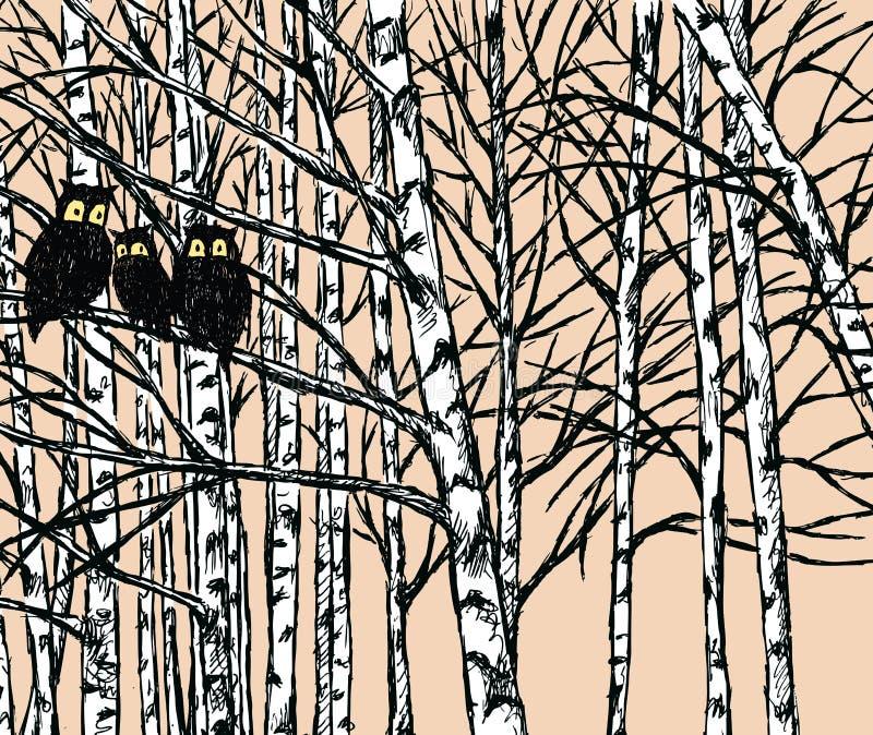 Imagem do vetor das corujas na floresta do vidoeiro ilustração royalty free