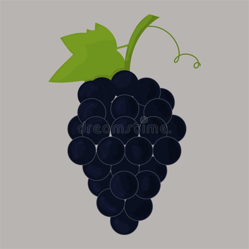 Imagem do vetor das uvas ilustração royalty free