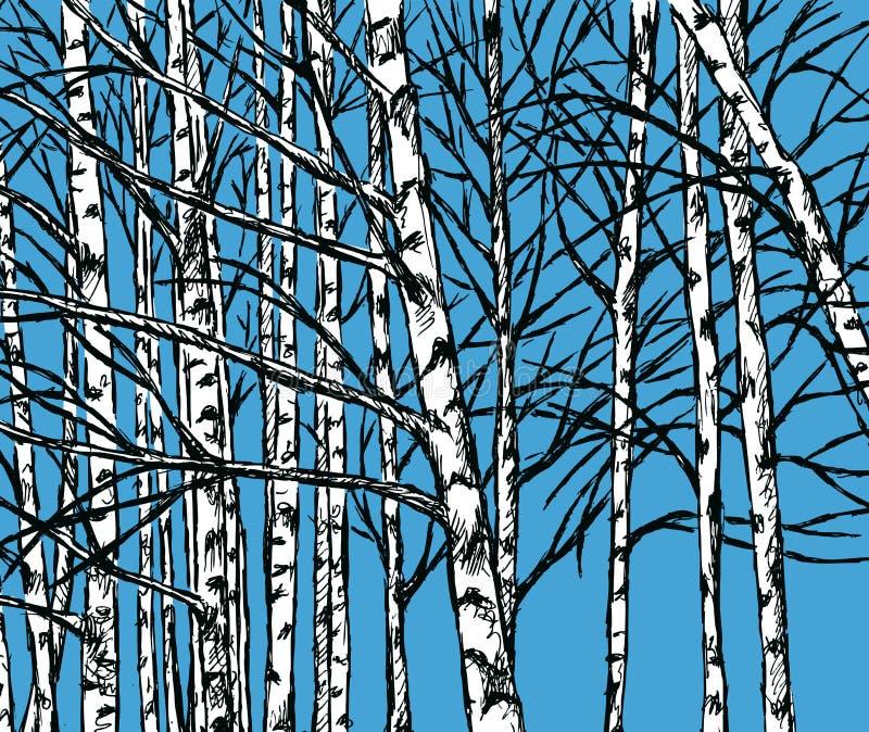Imagem do vetor de um bosque do vidoeiro na estação fria ilustração royalty free
