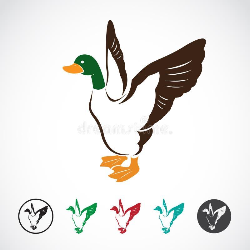 Imagem do vetor de um pato selvagem ilustração do vetor