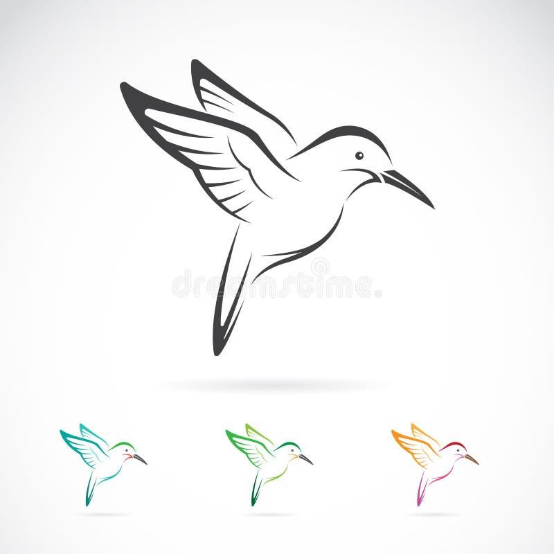 Imagem do vetor de um projeto do colibri ilustração do vetor
