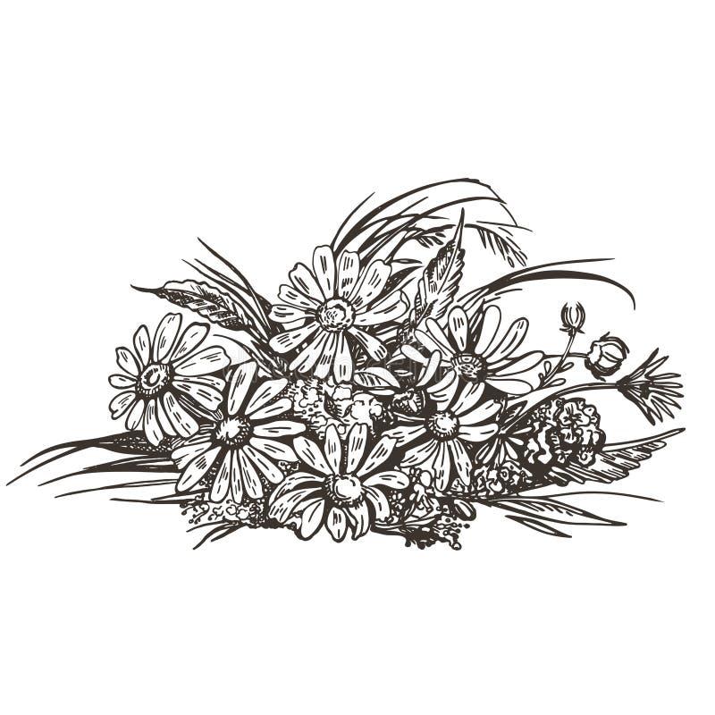 Imagem do vetor de um ramalhete de flores selvagens Esbo?o do vintage ilustração stock