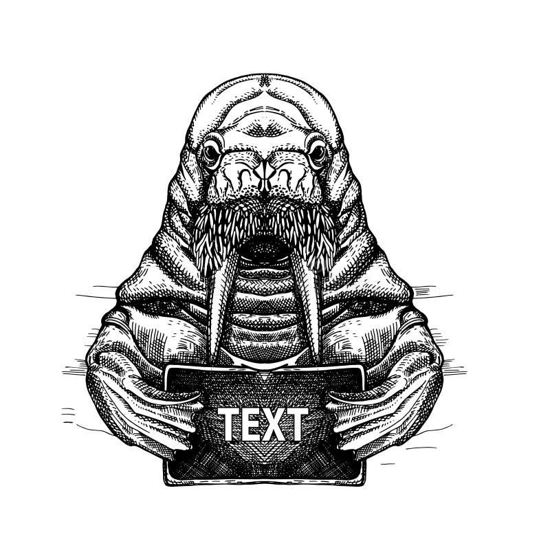 Imagem do vetor de uma morsa com um cartão nas aletas Projeto do t-shirt Esbo?o da tatuagem ilustração stock