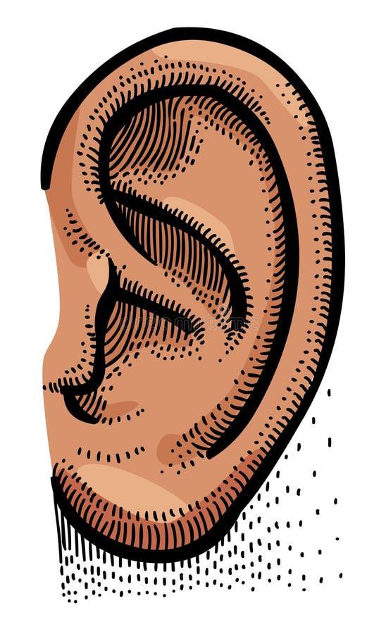 Imagem dos desenhos animados da orelha humana ilustração do vetor