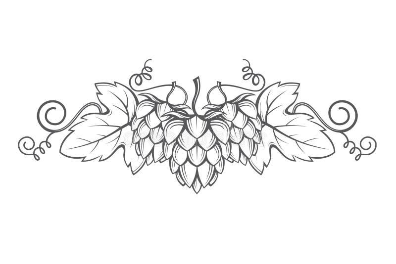 Imagem dos lúpulos ilustração royalty free