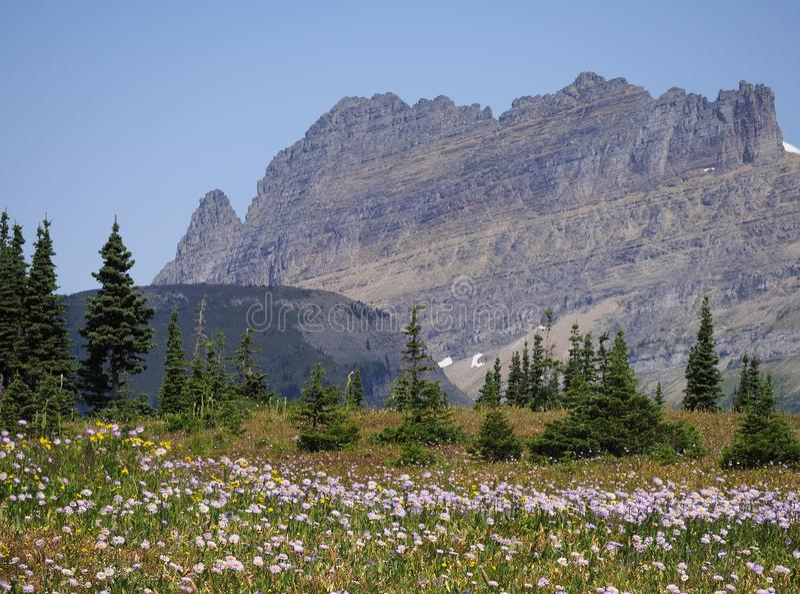 Imagem empilhada foco do parque nacional bonito de flores selvagens e de geleira da paisagem foto de stock