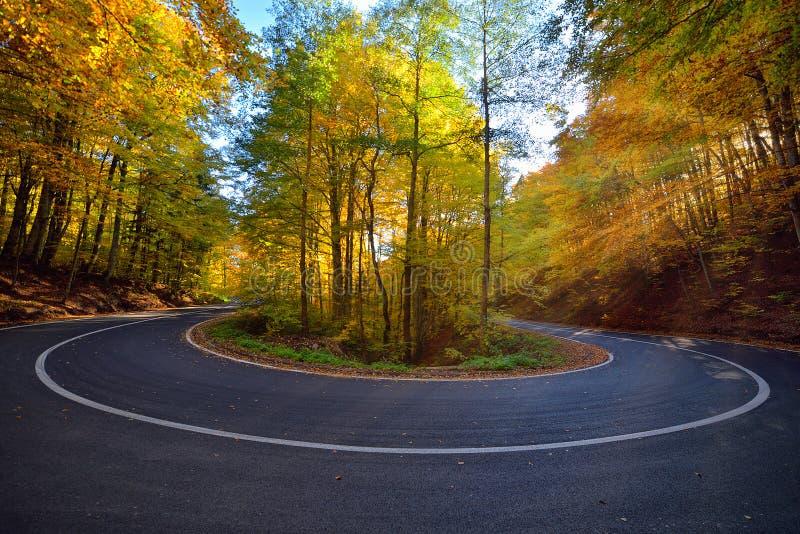 A imagem esplêndida na floresta coloriu as folhas, estrada asfaltada, luz do por do sol com sunraws foto de stock royalty free