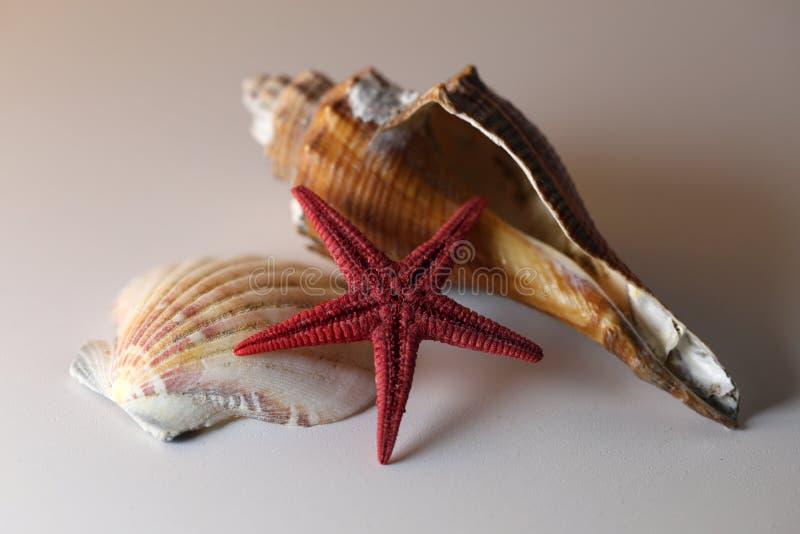 Imagem imóvel da vida de conchas do mar coloridas em uma tabela branca imagem de stock royalty free