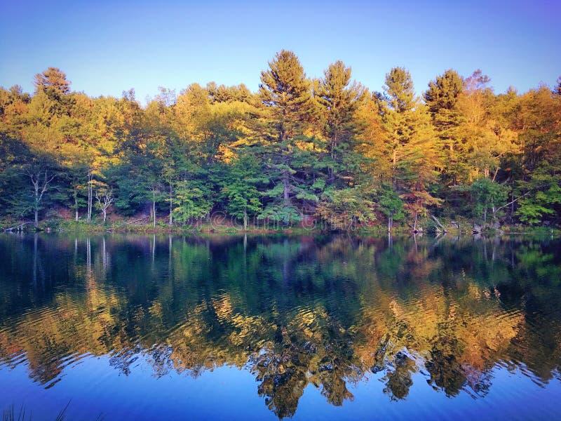 Imagem invertida das árvores amarelas do outono na água fotografia de stock