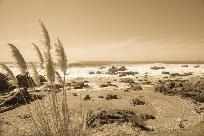 Imagem litoral no sepia foto de stock royalty free
