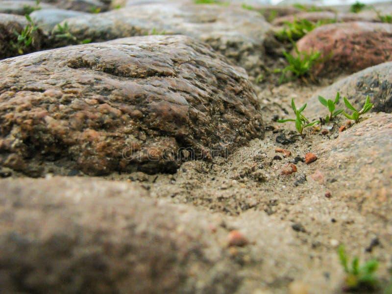 Imagem macro da terra, pedra fotografia de stock