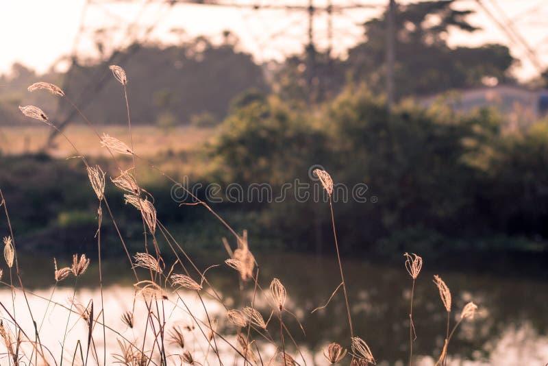 Imagem macro de gramas selvagens, profundidade de campo pequena Efeito do vintage Gramas selvagens da natureza rural bonita no po imagens de stock royalty free