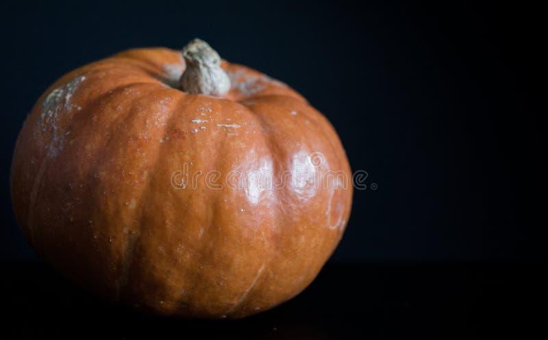Imagem macro de uma abóbora isolada com fundo escuro, temperamental imagem de stock