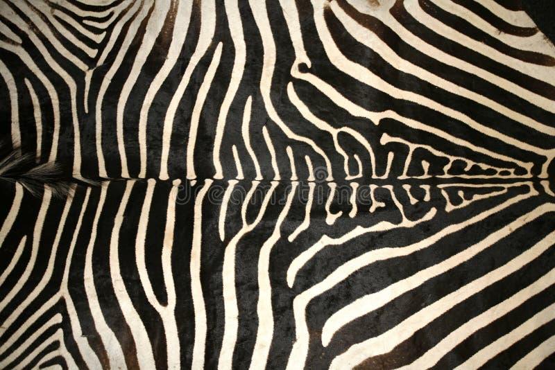 Imagem macro de uma textura da pele da zebra como um fundo foto de stock
