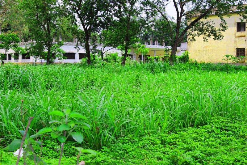 Imagem natural da folha verde Floresta e ?rvore verde da selva Cen?rio natural bonito Selvas tropicais profundas Autumn Landscape foto de stock