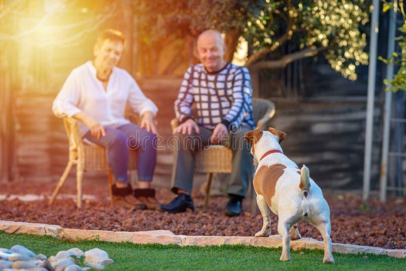 Imagem positiva dos sêniores felizes que jogam no cão imagens de stock royalty free