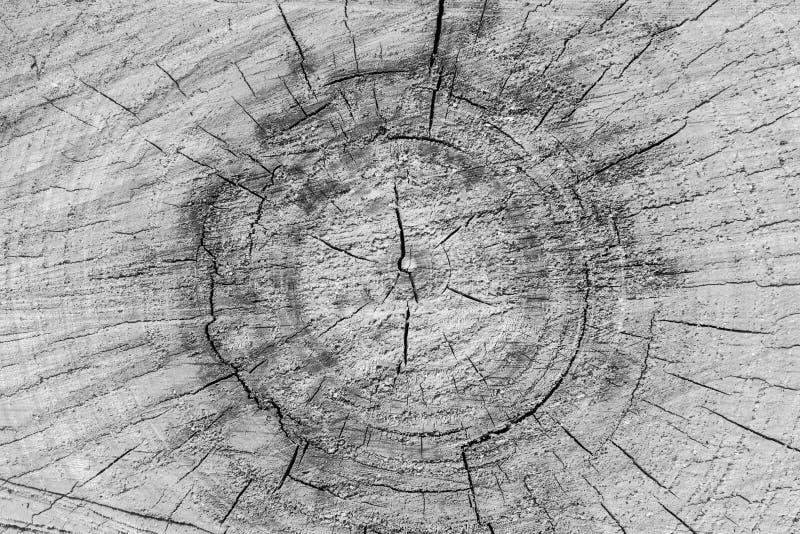 Imagem preto e branco da textura do coto de árvore com anéis de árvore fotografia de stock royalty free