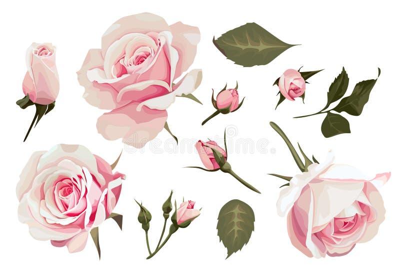 Imagem realística de Art Pink Flower do grampo do vetor das rosas ilustração royalty free