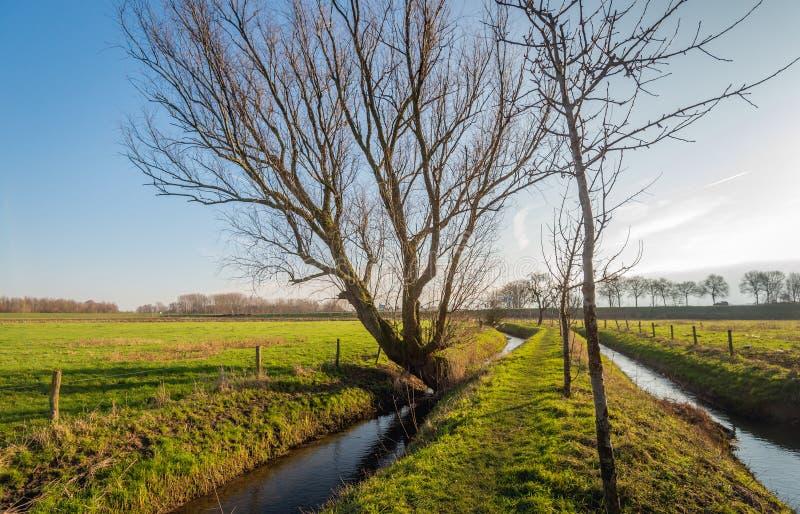 Imagem retroiluminada da paisagem holandesa do po'lder imagens de stock royalty free