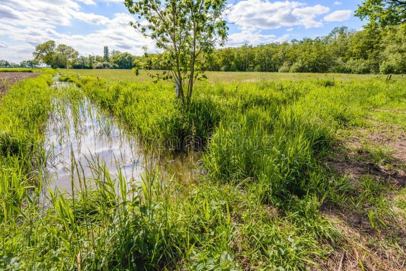 Imagem retroiluminada de um córrego pequeno em uma paisagem holandesa do po'lder fotos de stock royalty free