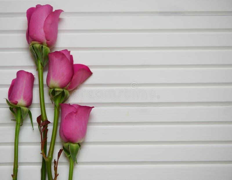 Imagem romântica da fotografia da flor com as rosas cor-de-rosa no botão em um fundo de madeira branco natural imagens de stock
