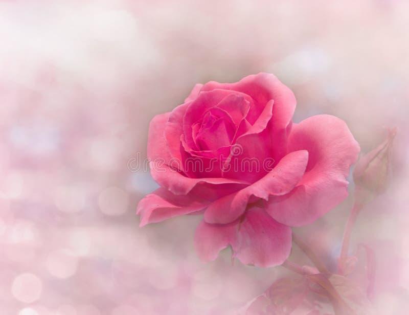 A imagem sonhadora de uma incandescência cor-de-rosa aumentou fotografia de stock