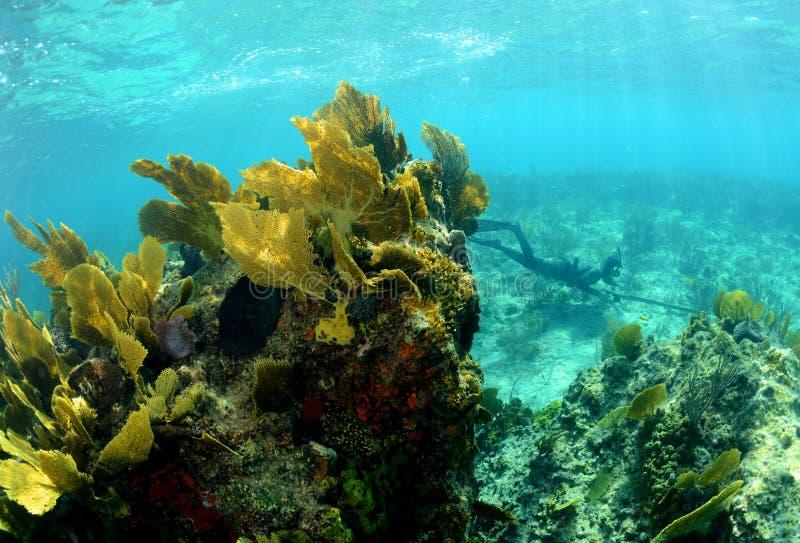 Imagem subaquática do recife de corais com um homem que spearfishing imagens de stock royalty free