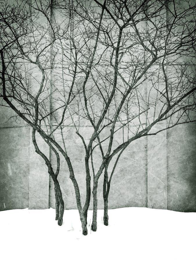 Imagem suja do parque do inverno com árvores foto de stock