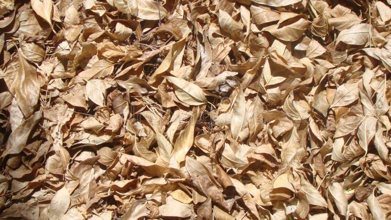 Imagem surpreendente da vegetação rasteira da folha foto de stock royalty free