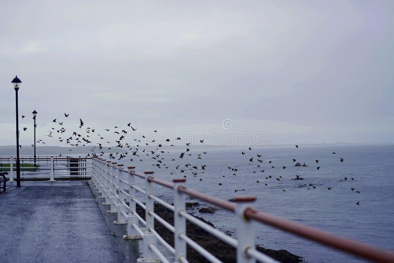 Imagem surpreendente do mundo da liberdade da natureza dos pássaros do oceano do mar com amor imagem de stock