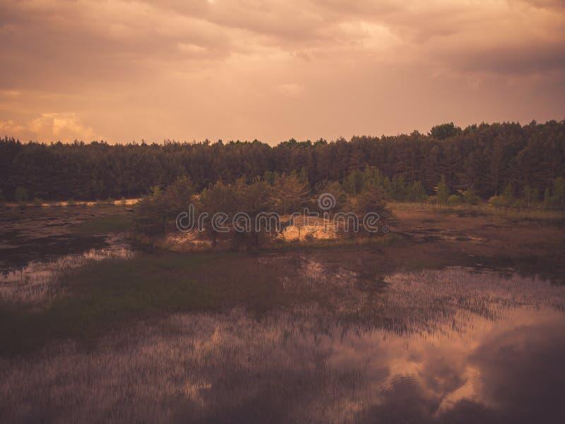 Imagem tonificada do lago selvagem na floresta foto de stock royalty free