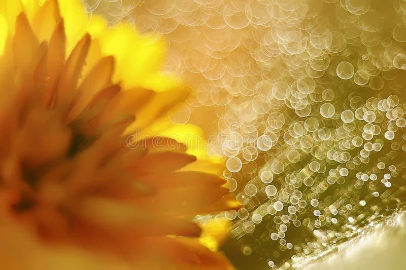 Imagen abstracta de flores y del bokeh amarillos brillantes fotografía de archivo libre de regalías